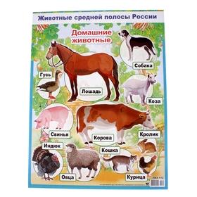 """Плакат """"Домашние животные"""" А2"""