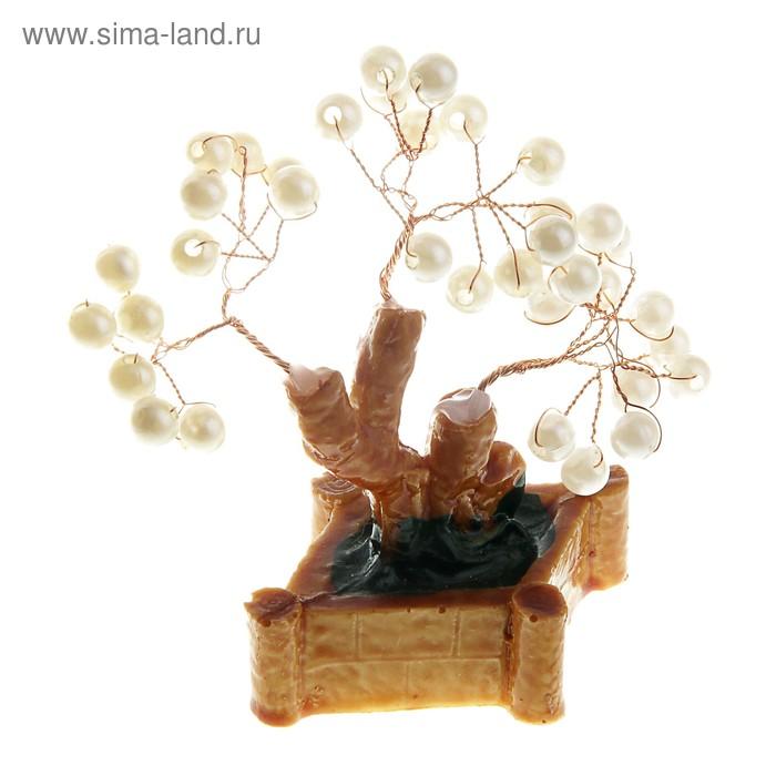 """Денежное дерево """"Маленький жемчуг"""""""