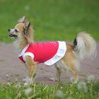 Платье OSSO для собак «Красотка», размер 20, микс цветов