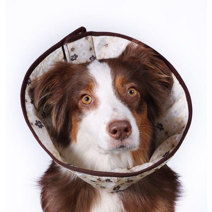 Ветеринарный елизаветинский воротник OSSO, М (обхват шеи 40-48 см)