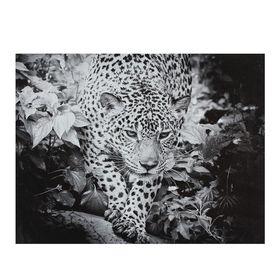 Картина на подрамнике 'Чёрно-белый леопард' Ош