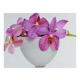 Картина на подрамнике 'Орхидея в вазе' Ош
