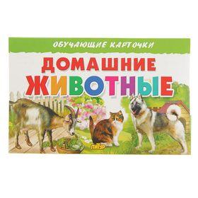 Обучающие карточки. Домашние животные