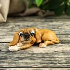 Дворовый пёс