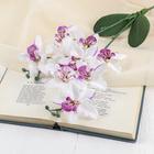 """Цветы искусственные """"Орхидея Фаленопсис мультифлора"""" бело-сиреневая"""