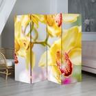 "Ширма ""Орхидеи"" 200 × 160см"