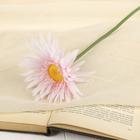"""Цветок искусственный """"Астра Янина"""" 11*57 см, бело-розовый"""