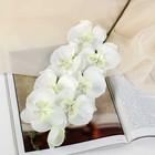 """Цветы искусственные """"Орхидея молди"""" 9*66 см, белая"""