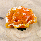 Коралл малый, 5,8 х 5,2 х 3 см