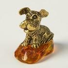 Сувенир «Собачка Жужа», натуральный янтарь