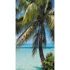 "Фотообои ""Пальма на фоне океана"" 1-А-104 (1 полотно), 150х270 см"