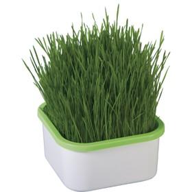 Проращиватель для зелёной травки Ош