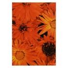 """Блокнот А7, 70 листов на клею """"Оранжевые цветы"""", твердая обложка, глянцевая ламинация"""