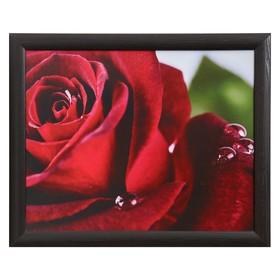 Картина 'Бутон красной розы' 40*50 см МДФ Ош