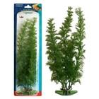 Растение PENN-PLAX FLOWERING CABOMBA, 22см, зеленое