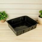 """Ящик для рассады, 35 х 29.9 х 5 см, """"Урожай-10 Универсал"""""""