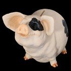 Копилка «Пятнистый свин», 12,5х19х15 см, полистоун