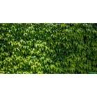 Фотосетка «Виноградная стена», 250 х 158 см, с фотопечатью