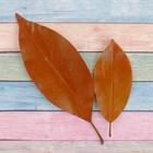Сухие листья, (набор 2 шт), размер 1 шт 14,5*5, цвет коричневый