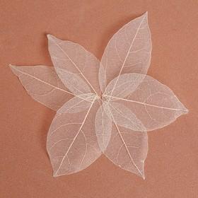 Сухие листья, (набор 5 шт), размер 1 шт 8*5, цвет белый Ош