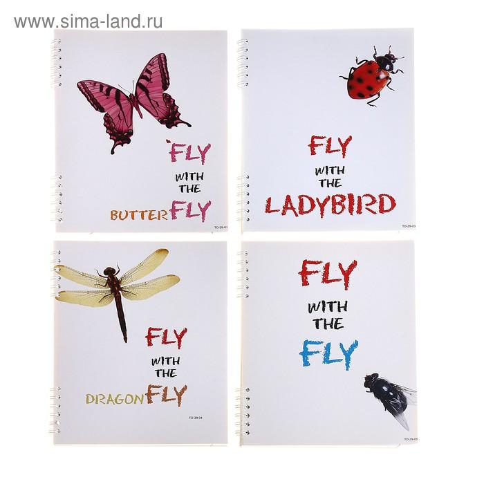 Тетрадь 80 листов клетка на гребне Fly, картонная обложка, 4 вида МИКС