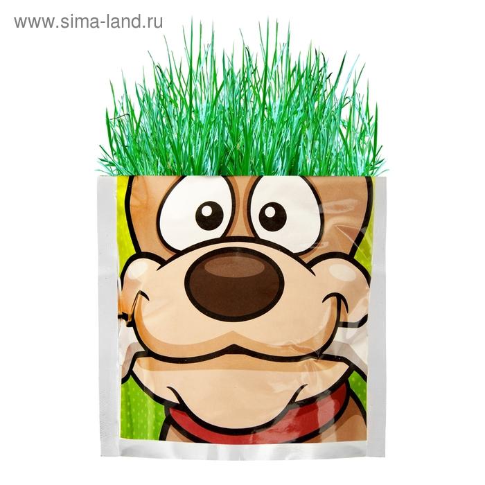 """Растущая трава """"Собака"""", трава"""