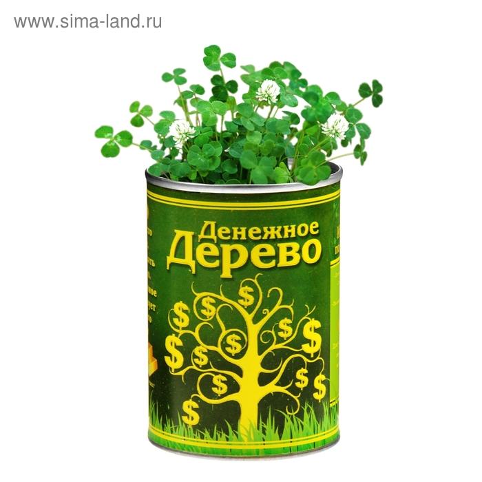 """Растущая трава в консервной банке """"Денежное дерево"""", клевер"""