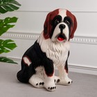 чёрно-рыжий