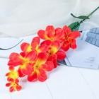 """Цветы искусственные """"Жёлто-красная орхидея Гуарианте"""""""