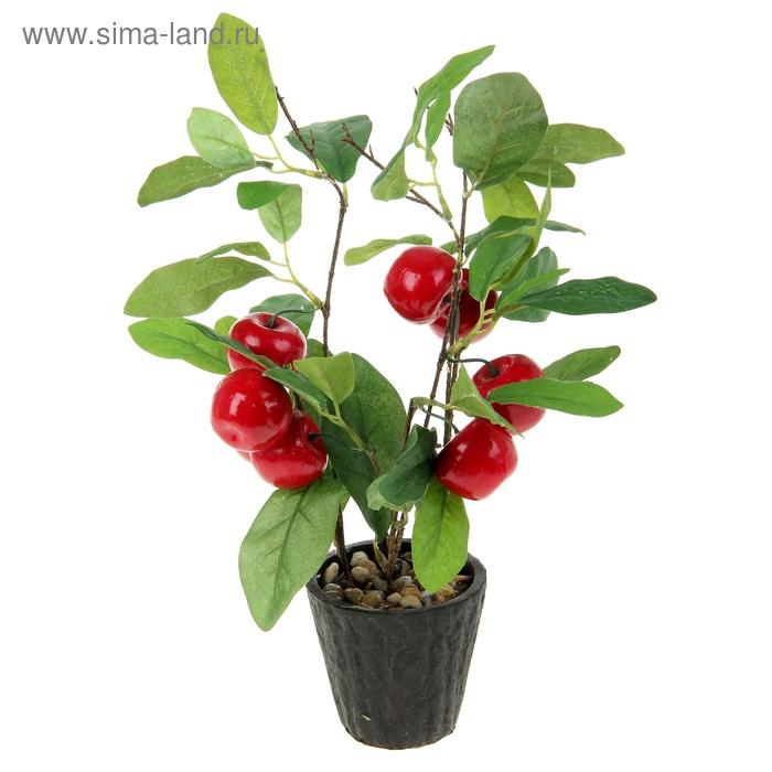 """Бонсай """"Красные яблочки"""" 8 плодов"""