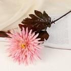 """Цветок искусственный """"Астра"""" розовая"""