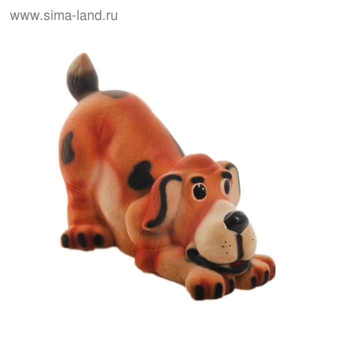 "Копилка ""Собака Ричард"" флок, рыжая"