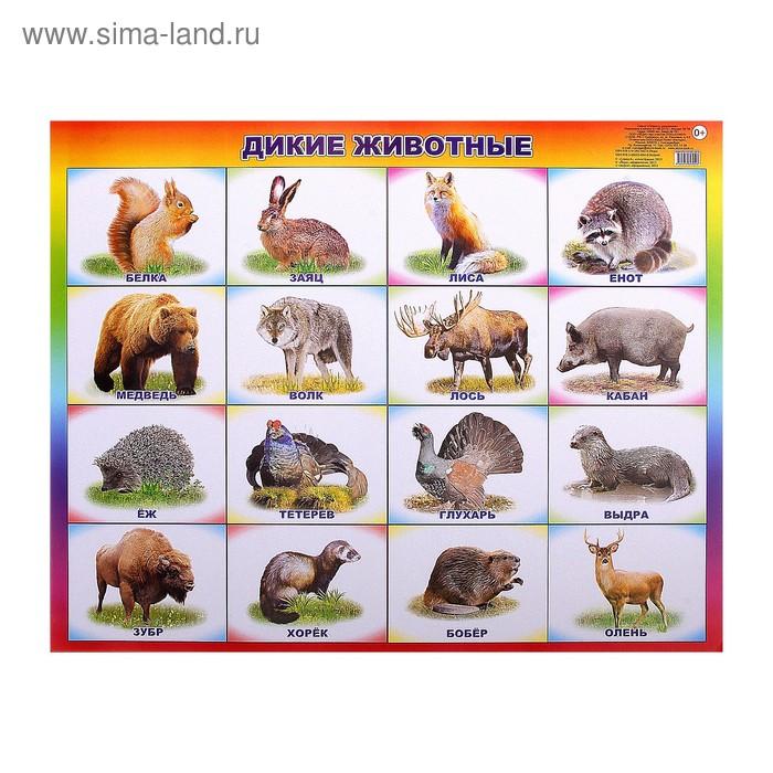 """Плакат """"Дикие животные"""""""