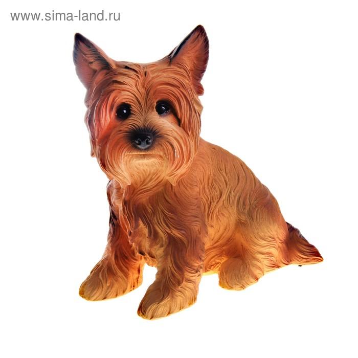 """Копилка """"Собака Жужа"""" рыжая"""
