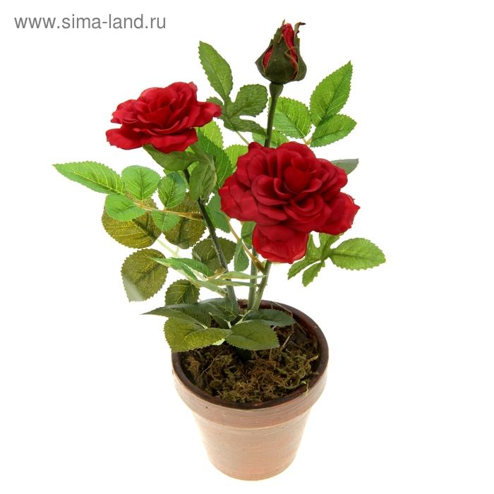 """Композиция в горшке """"Красные розы в цвету"""""""