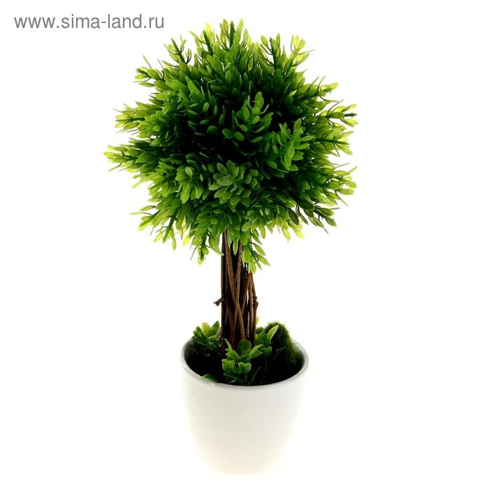 """Бонсай """"Зелёный шар"""" 29 см"""