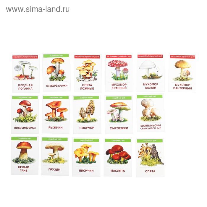 """Карточки обучающие """"Грибы"""" 16 шт. 6,3 х 8,7 см"""