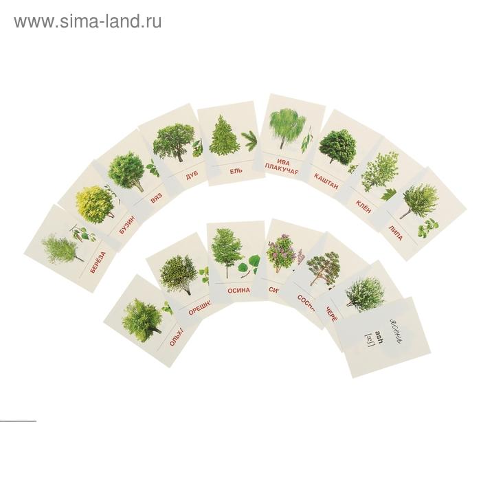 """Карточки обучающие """"Деревья и кустарники"""" 16 шт. 6,3 х 8,7 см"""