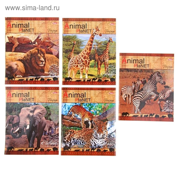 Тетрадь 48 листов линейка Animal Planet, 5 видов МИКС