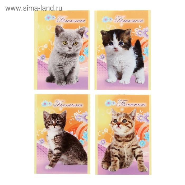"""Блокнот А6, 16 листов на скрепке """"Котёнок"""", 4 вида МИКС"""
