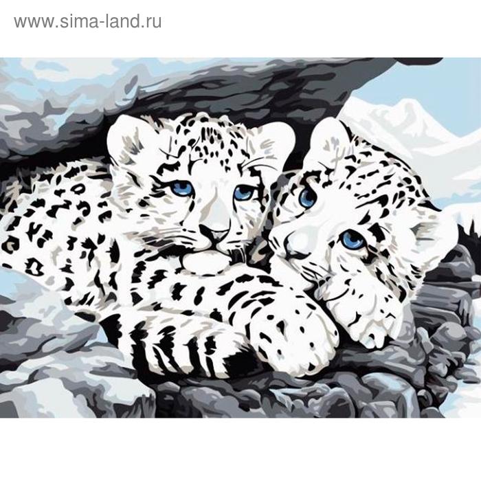 """Роспись по холсту """"Маленькие снежные барсы"""" по номерам с красками по 3 мл + кисти + инструкция + крепеж"""