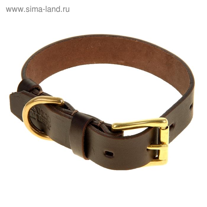 Ошейник кожаный, однослойный, 2,5 см х 50 см, с бронзовой фурнитурой, коричневый
