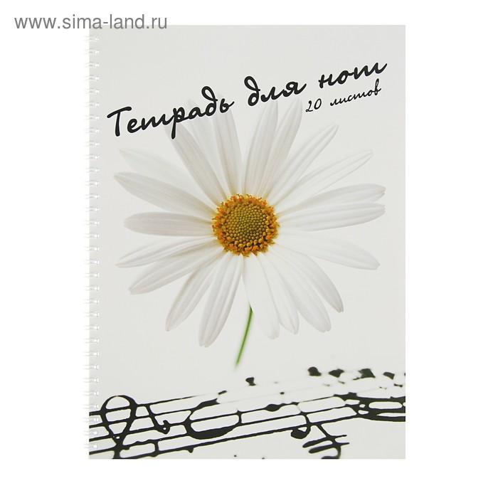 Тетрадь для нот А4, 20 листов на гребне, горизонтальная