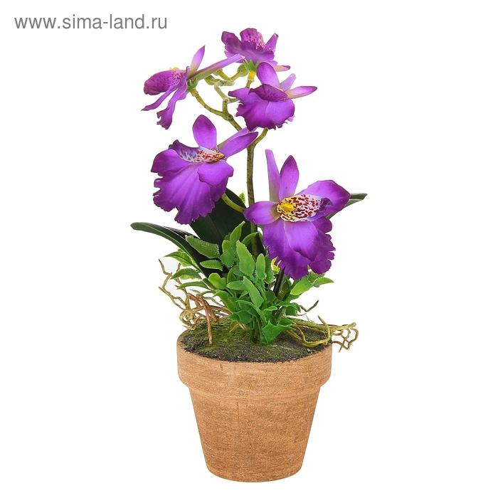 "Композиция ""Яркая орхидея Зигопеталум"" (микс)"