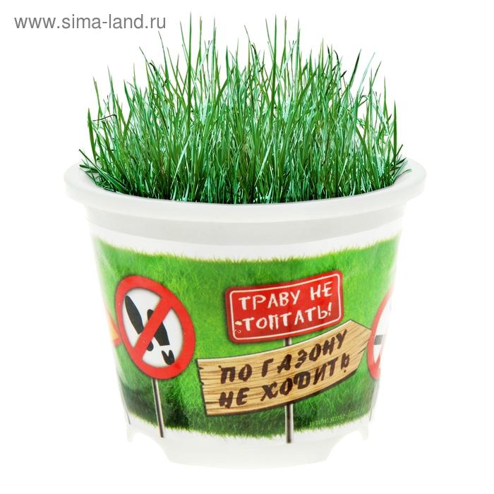 """Растущая трава в горшочке """"Мой личный газон"""""""