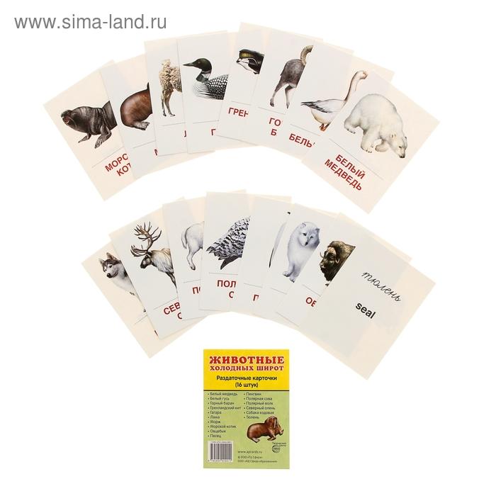 """Карточки обучающие """"Животные холодных широт"""" 16 шт. 6,3 х 8,7 см"""