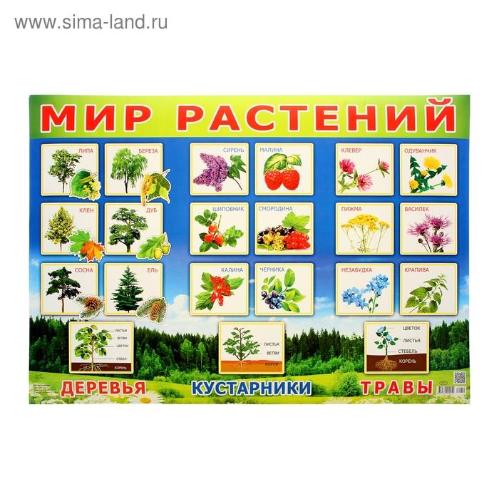 """Плакат """"Мир растений!"""", дервья, ягоды 49х69 см"""
