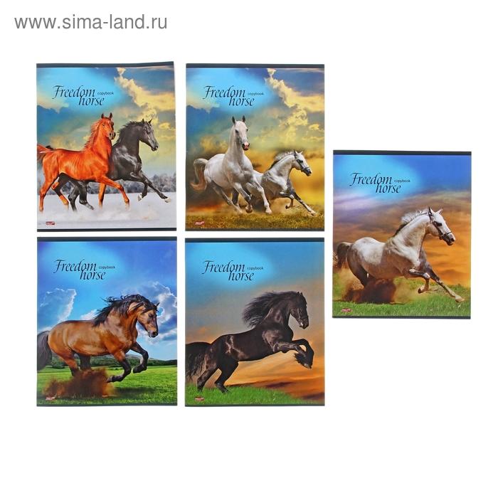 """Тетрадь 36 листов клетка """"Изумительные лошади"""", обложка картон хромэрзац, 5 видов МИКС"""
