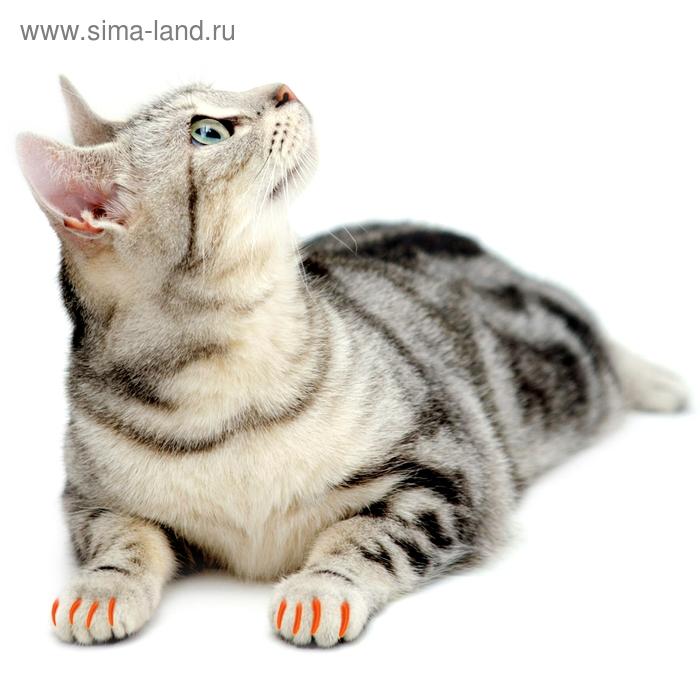 Накладные когти XS оранжевые, 20 шт