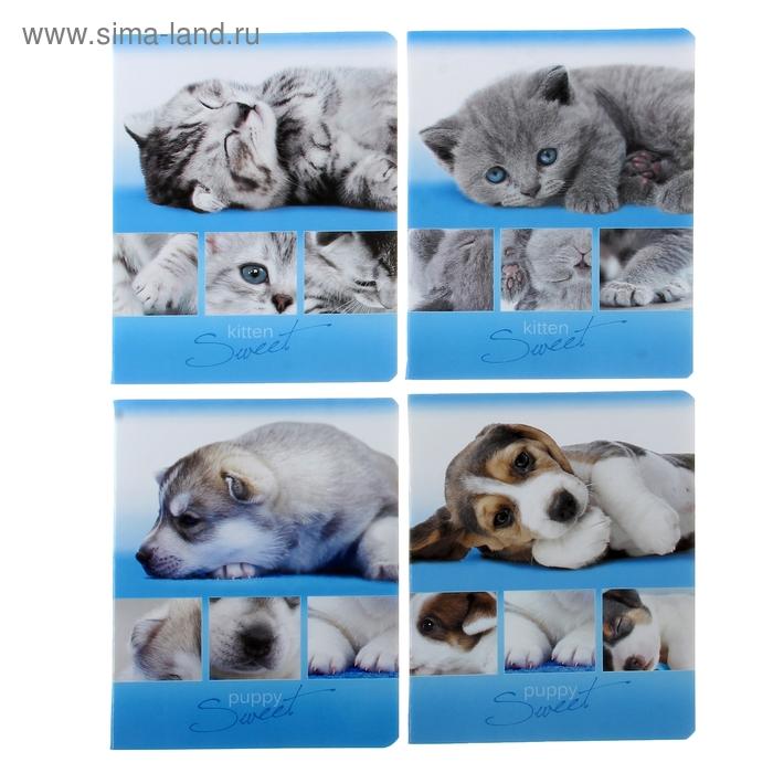 Тетрадь 48 листов клетка Puppy and Kitten, картонная обложка, 4 вида МИКС